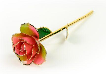 Lunar-Rose-Only