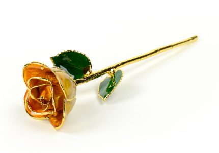 Orange-TT-Rose-Only