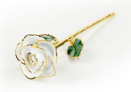 White-Rose-Only